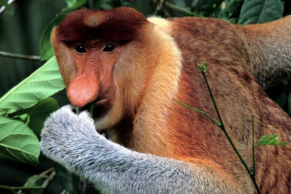 название обезьяны из 10 букв